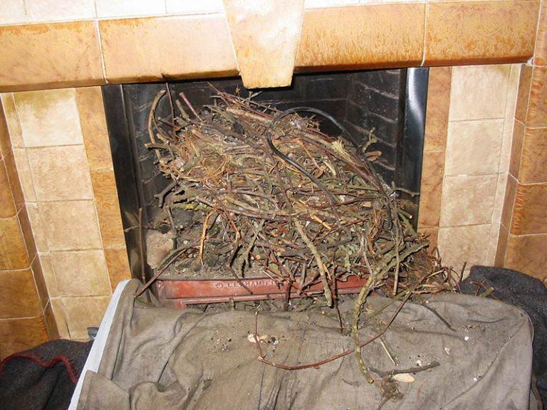 Birds Nest In Chimney